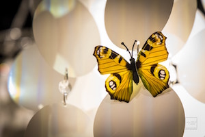 Follow The Butterfly - EVENTO TID