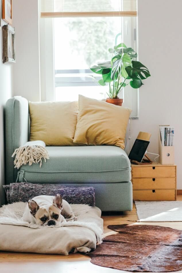 Interior garden: quando il verde fa design